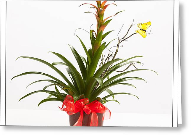 Vase Framed Prints Greeting Cards - Get Well Potted Plant 8055.02 Greeting Card by M K  Miller