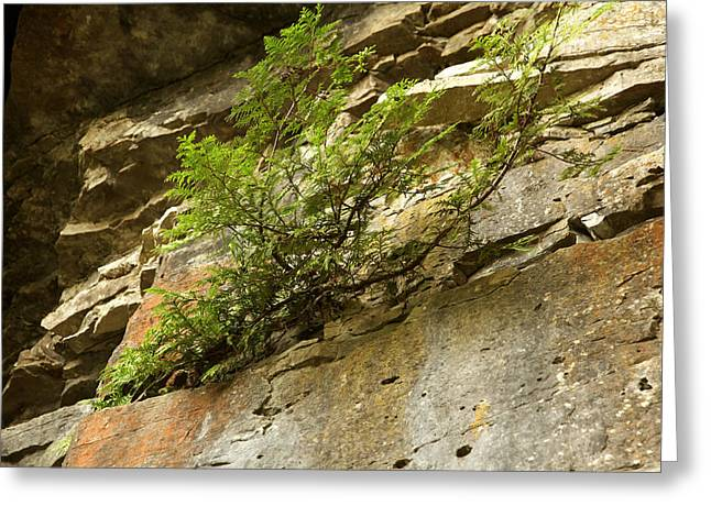 Growing Out Of Rock Greeting Cards - Getting a Toehold Greeting Card by Michael David James
