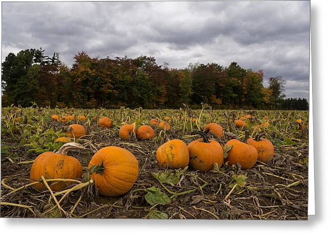 Farmers Field Greeting Cards - Getting Ready for Halloween Greeting Card by Georgia Mizuleva