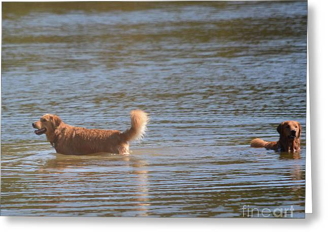 Dog In Lake Greeting Cards - Getting Refreshed  Greeting Card by Ruth  Housley