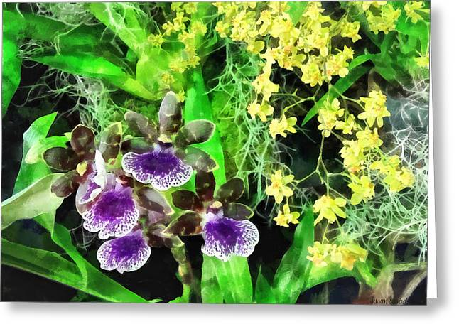 Orchid Greeting Cards - Geyser Jaimie and Golden Fantasy Orchids Greeting Card by Susan Savad