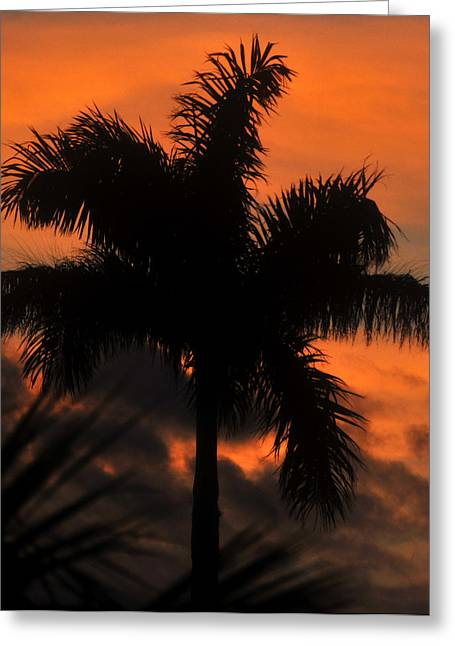 Royal Art Greeting Cards - Royal Palm Sunset Greeting Card by David Lee Thompson