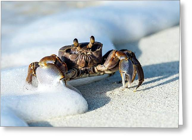 Ghost Crab In The Foam Line Greeting Card by Peter Chadwick