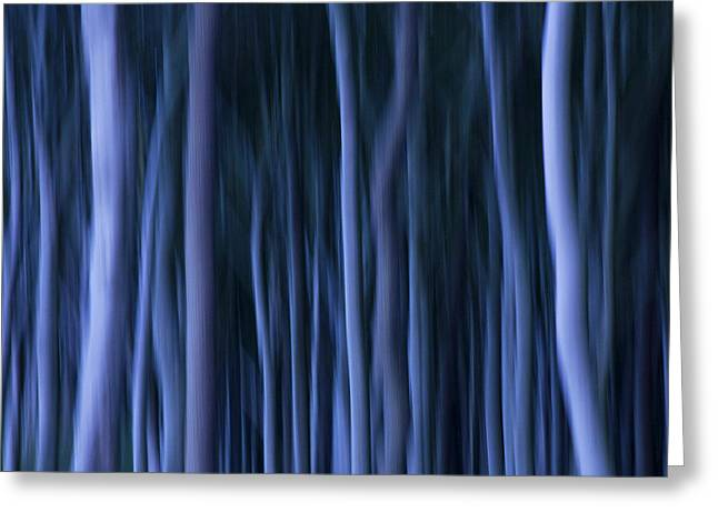 Ghostly Greeting Cards - Ghost Forest Greeting Card by Heiko Koehrer-Wagner