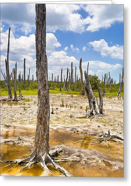 Mexicano Greeting Cards - Ghost Forest Of The Yucatan Greeting Card by Mark Tisdale