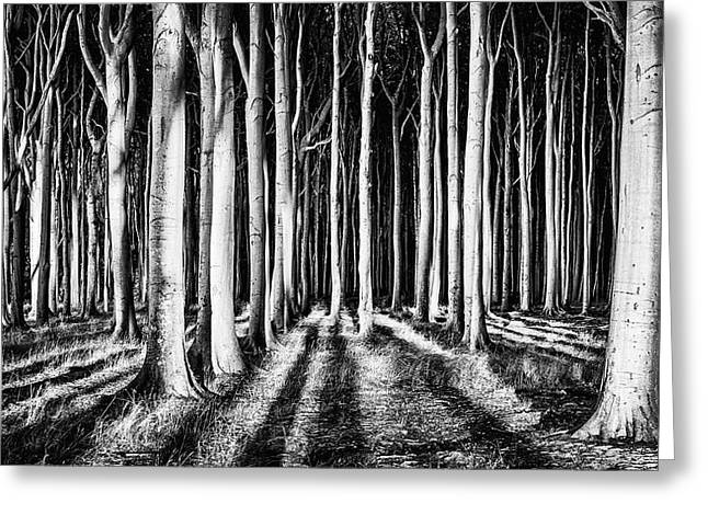 Ghost Forest Greeting Card by Pixxelpark