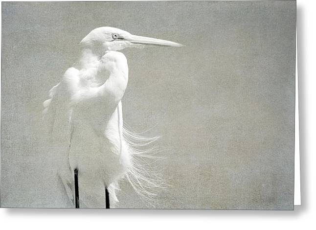 Great White Egret Greeting Cards - Ghost Greeting Card by Fraida Gutovich