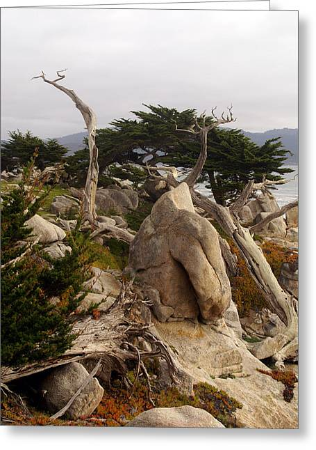 Mile One Greeting Cards - Ghost Tree Site 17 Mile Drive Greeting Card by Barbara Snyder