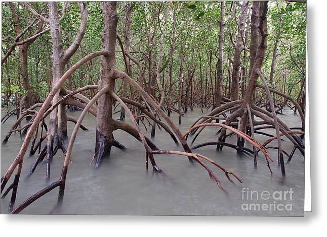 Mangrove Forest Greeting Cards - Ghostly Mangroves Greeting Card by Emma Jones