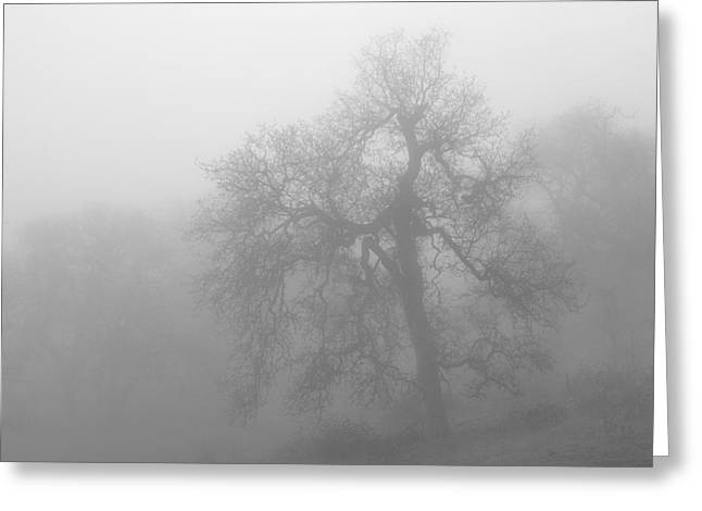Ghostly Greeting Cards - Ghostly Oak In Fog  Central California Black and White Monochrome Greeting Card by Ram Vasudev