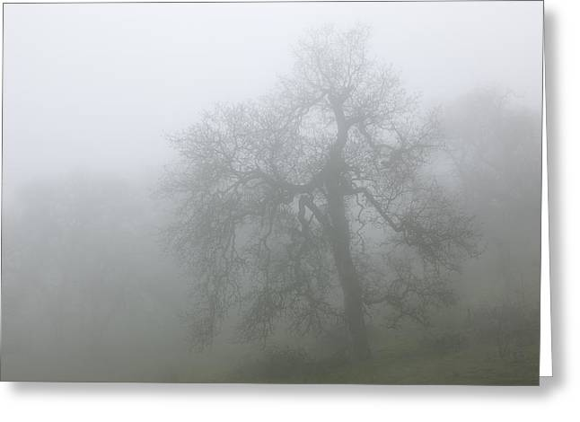 Ghostly Greeting Cards - Ghostly Oak in Fog - Central California Greeting Card by Ram Vasudev