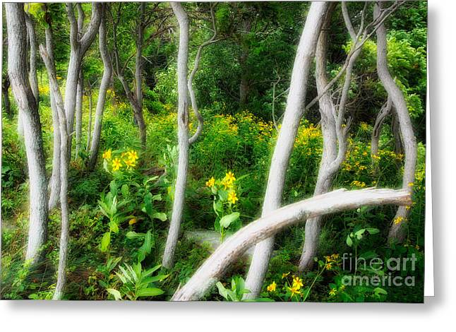 White Knob Mountains Greeting Cards - Ghosts in the Garden I - Blue Ridge Parkway Greeting Card by Dan Carmichael