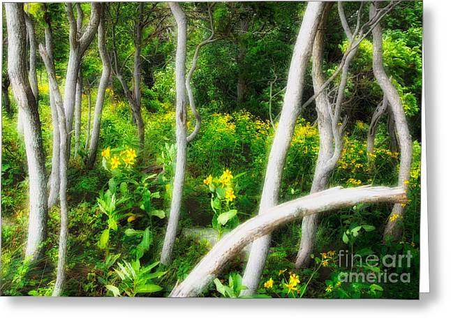 White Knob Mountains Greeting Cards - Ghosts in the Garden II - Blue Ridge Parkway Greeting Card by Dan Carmichael
