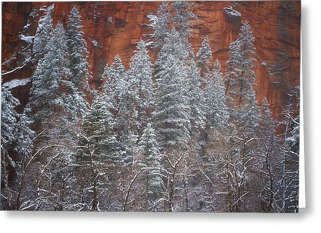 West Fork Greeting Cards - Ghosts of Winter Greeting Card by Peter Coskun