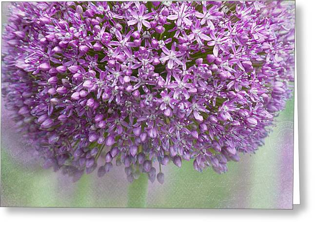 French Handwriting Greeting Cards - Giant Allium Greeting Card by Bonnie Bruno