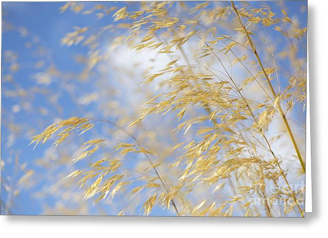 Seeds Greeting Cards - Giant Feather Grass Greeting Card by Tim Gainey