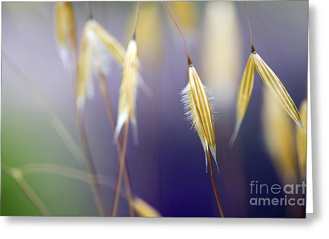 Feathery Greeting Cards - Giant feather grasses  Greeting Card by Tim Gainey