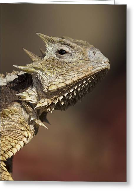 Lizard Head Greeting Cards - Giant Horned Lizard Greeting Card by San Diego Zoo