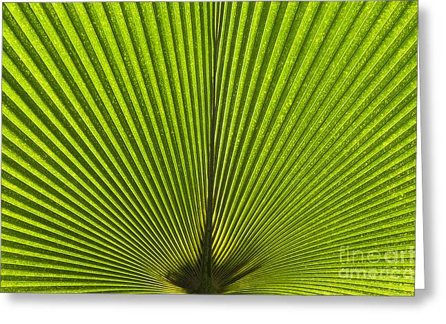 Color Green Greeting Cards - Giant Pritchardia Leaf Pattern Greeting Card by Tim Gainey