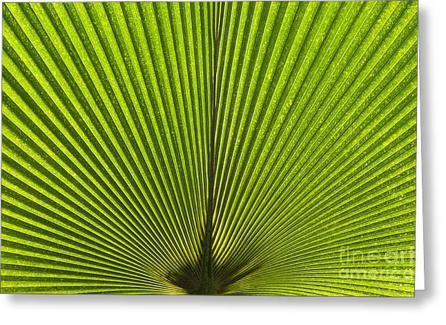 Giant Pritchardia Leaf Pattern Greeting Card by Tim Gainey