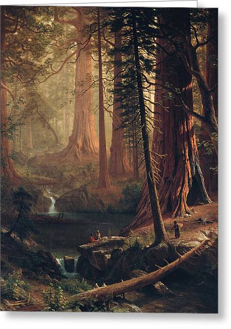 1874 Greeting Cards - Giant Redwood Trees of California Greeting Card by Albert Bierstadt