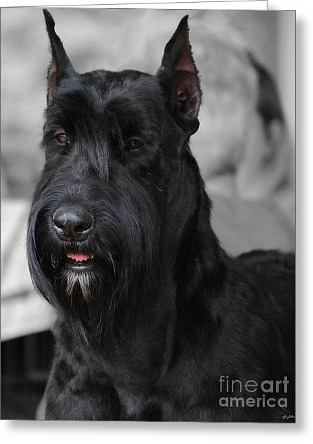 Dog Photo Greeting Cards - Giant Schnauzer Greeting Card by Jai Johnson