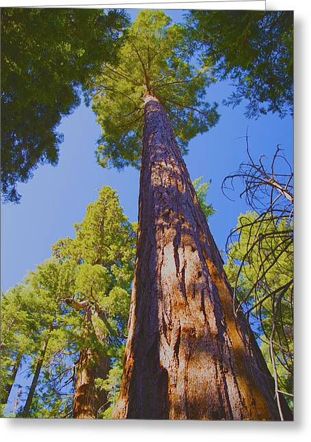 Tree Roots Greeting Cards - Giant Sequoia Greeting Card by Barbara Snyder