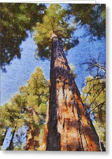 Tree Roots Greeting Cards - Giant Sequoia Pastel Greeting Card by Barbara Snyder