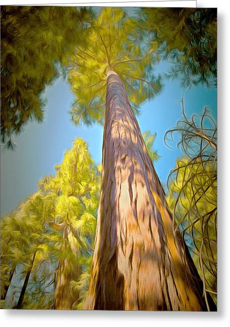 Tree Roots Greeting Cards - Giant Sequoia Tree Greeting Card by Barbara Snyder