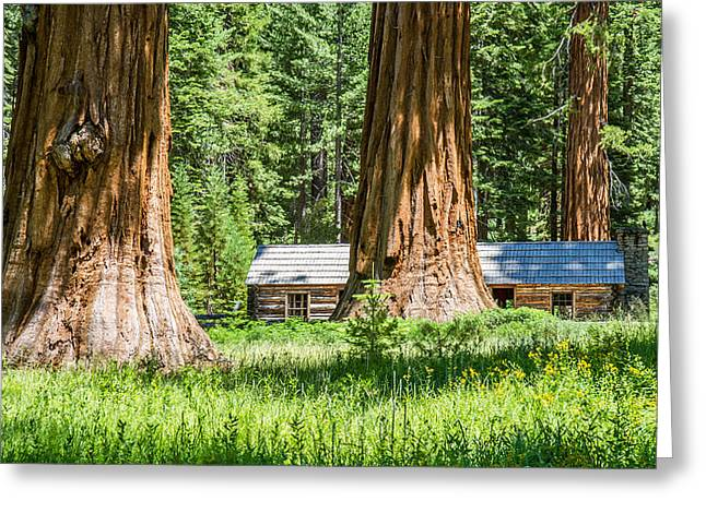 Giant Sequoia Greeting Cards - Giant Sequoia trees in Yosemite Greeting Card by Pierre Leclerc Photography