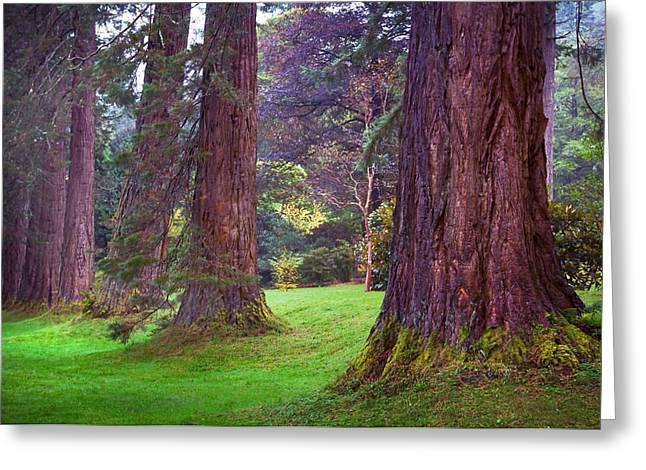 Giant Sequoias II. Benmore Botanical Garden. Scotland Greeting Card by Jenny Rainbow