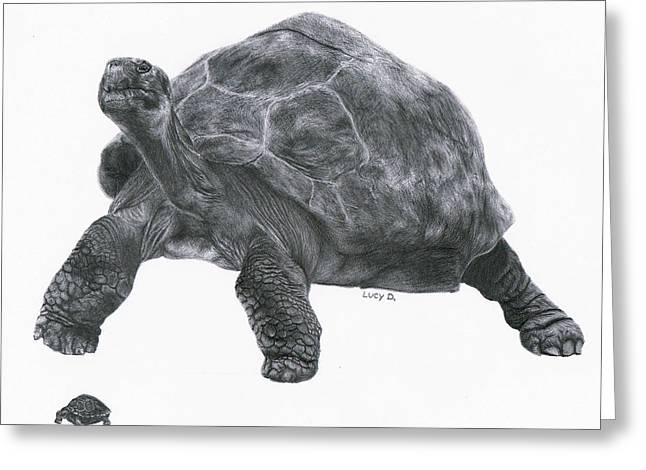 Lucy D Greeting Cards - Giant Tortoise Greeting Card by Lucy D