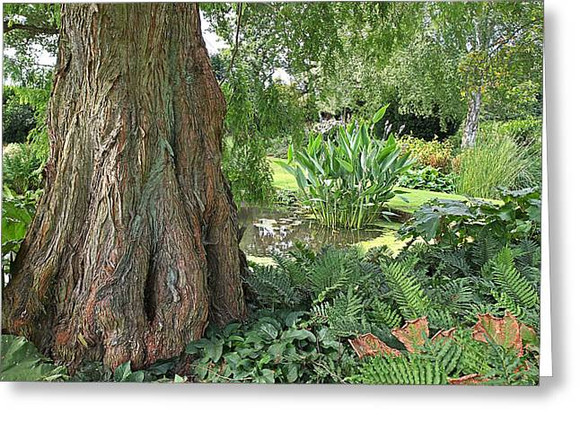 The Trees Greeting Cards - Giant Tree By The Pond Greeting Card by Gill Billington