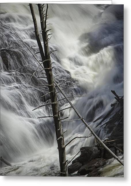 Randy Greeting Cards - Gibbons Falls in Yellowstone No 2768 Greeting Card by Randall Nyhof