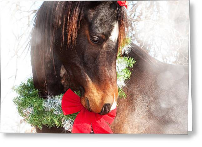 Gift Horse Greeting Card by Sari ONeal