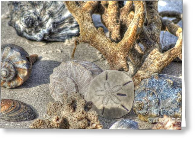 Gifts From The Sea Greeting Card by Benanne Stiens