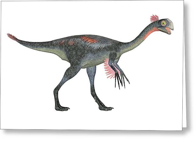Gigantoraptor Dinosaur Greeting Card by Friedrich Saurer