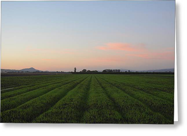 Gilroy Greeting Cards - Gilroy Field at Sunset Greeting Card by Roxanne Janson