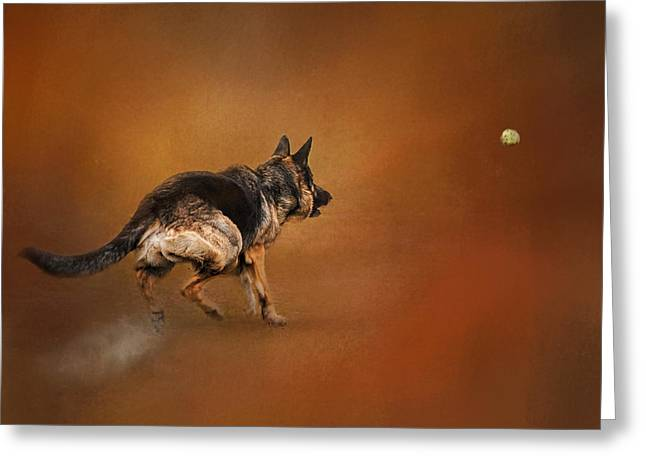 Artistic Photography Greeting Cards - Gimme That Ball - German Shepherd Greeting Card by Jai Johnson