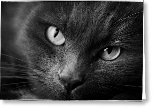 Cat Face Greeting Cards - Gina Greeting Card by Hans Mauli