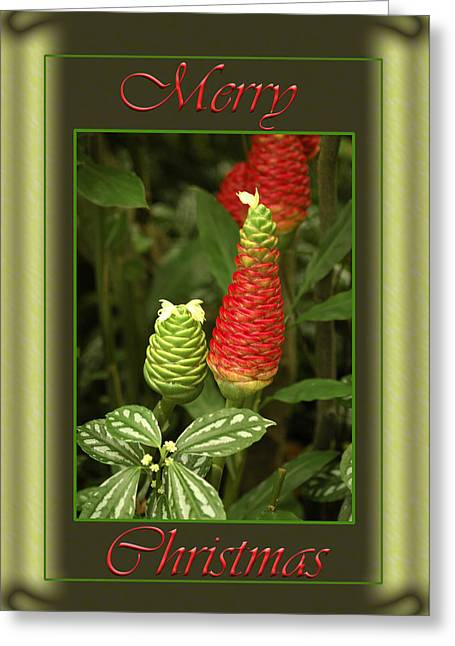 Christmas Greeting Greeting Cards - Ginger Lily Pine Cone Christmas Greeting Card by Carolyn Marshall