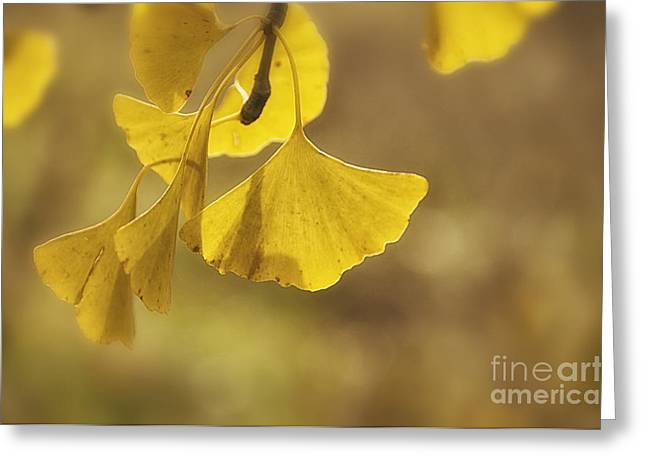 Gold Greeting Cards - Gingko Gold Greeting Card by Terry Rowe