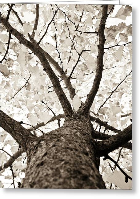 Trees Images Greeting Cards - Ginkgo Greeting Card by Frank Tschakert