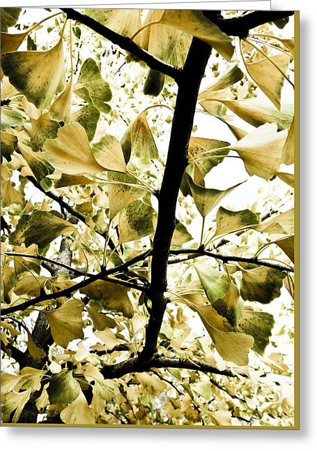 Ginkgo Leaves Greeting Card by Frank Tschakert