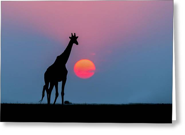 Giraffe At Sunset Chobe Np Botswana Greeting Card by Andrew Schoeman