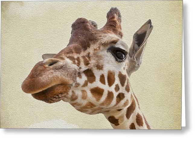 Sand Patterns Greeting Cards - Giraffe close up Greeting Card by Svetlana Sewell