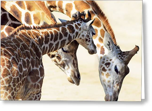 Precious Baby Greeting Cards - Giraffe Family Greeting Card by Camille Lopez