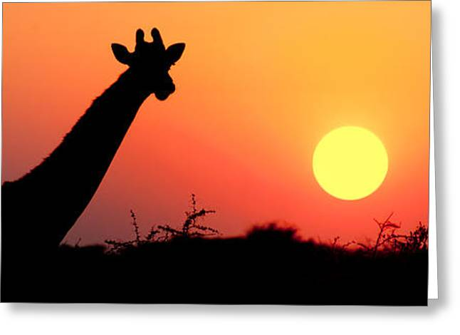 Giraffe Giraffa Camelopardalis Greeting Card by Panoramic Images