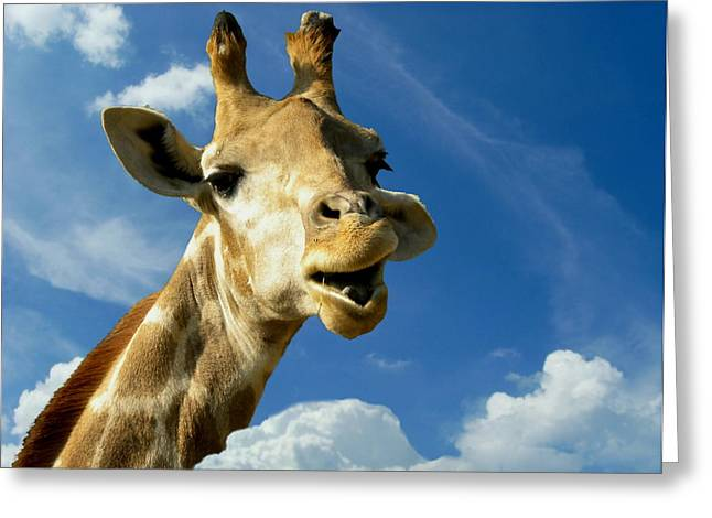Himmel Greeting Cards - Giraffe Greeting Card by Heike Hultsch
