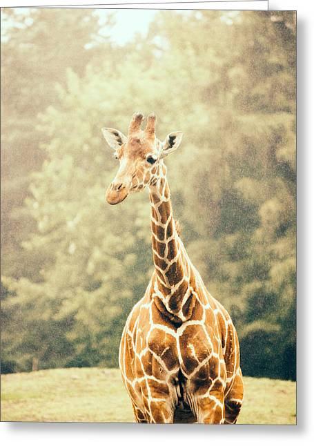 Giraffe In The Rain Greeting Card by Pati Photography
